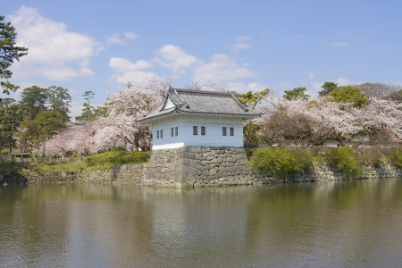 besiege: Odawara castle tower during cherry blossom period, Japan