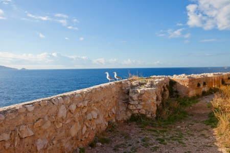 monte cristo: Two seagulls on the stone wall of If castle in autumn  If island, Marseilles, France