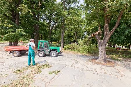 trees services: BRATISLAVA, SLOVAKIA - AUGUST 16, 2015: Workers try to remove broken by hurricane tree branch using rope and small tractor in Bratislava castle park, Slovakia