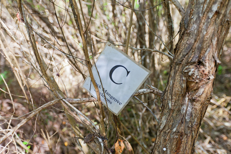 GRAND CAYMAN ISLAND - AUGUST 18, 2017: Sign of Black Mangrove Skeletons part of Mastic Trail. Mastic Trail is a forest walking path in Mastic Reserve of Grand Cayman, Cayman Islands Editorial