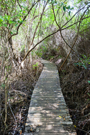 GRAND CAYMAN ISLAND - AUGUST 18, 2017: Footbridge in Boardwalk part of Mastic Trail. Mastic Trail is forest walking path in Mastic Reserve of Grand Cayman, Cayman Islands (British Overseas Territory) Editorial