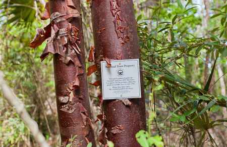 GRAND CAYMAN ISLAND - AUGUST 18, 2017: National Trust Property sign on red birch tree on Mastic Trail. Mastic Trail is a forest walking path in Mastic Reserve of Grand Cayman, Cayman Islands 新聞圖片