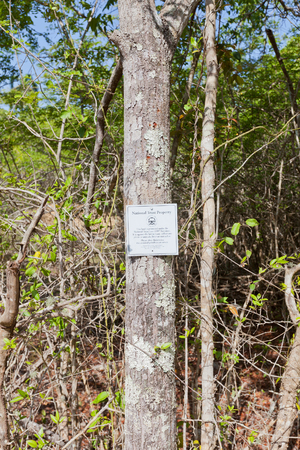 GRAND CAYMAN ISLAND - AUGUST 18, 2017: National Trust Property sign on tree trunk on Mastic Trail. Mastic Trail is a forest walking path in Mastic Reserve of Grand Cayman, Cayman Islands 新聞圖片