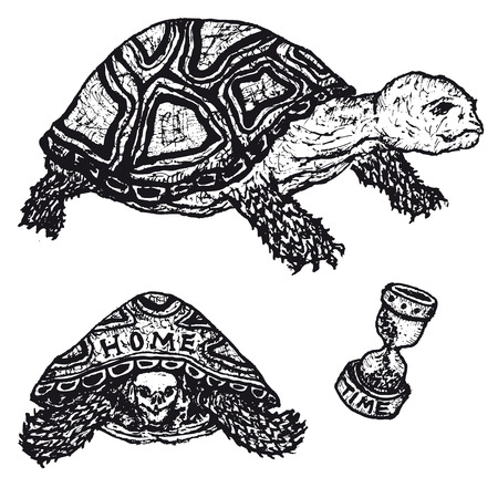 Illustration of a set of doodle hand drawn tortoises and turtles Illustration