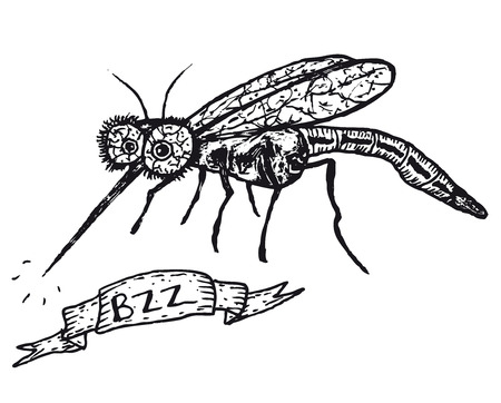 Illustration of a hand drawn funny mosquito cartoon character