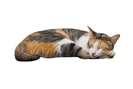 The sleeping cat with white background