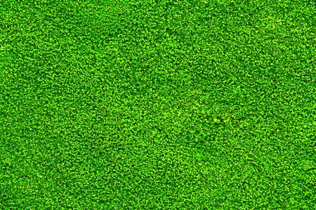 It is Texture of moss for pattern and background. Imagens
