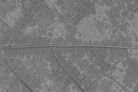 leaf texture: It is Design of dry leaf texture for pattern and background. Stock Photo