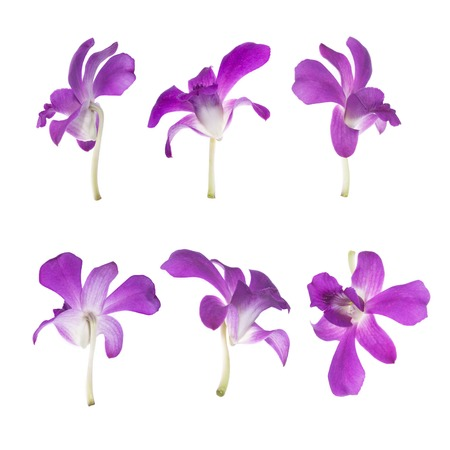 It is Six Purple orchids isolated on white. photo