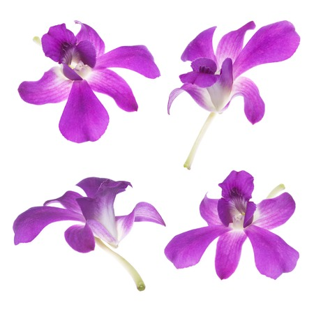 It is Four Purple orchids isolated on white. photo