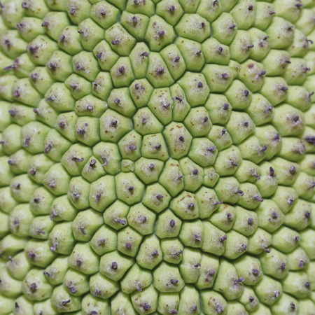 It is Jack fruit peel texture for pattern. photo