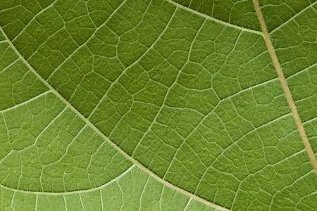 pedicel: It is Green leaf texture for pattern.