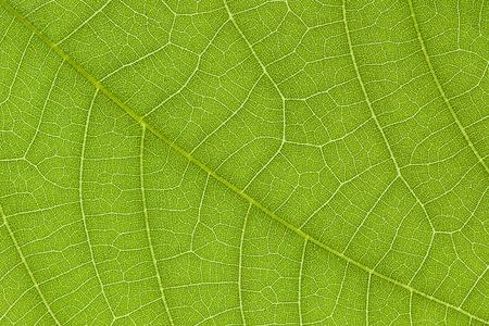 Het is Groene bladtextuur voor patroon en achtergrond. Stockfoto