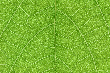 It is Design on leaf for pattern and background. Stok Fotoğraf