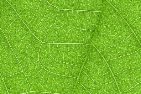tige: Il est de conception sur la texture des feuilles pour le modèle et le fond. Banque d'images