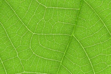 green lines: It is Design on leaf texture for pattern and background. Stock Photo