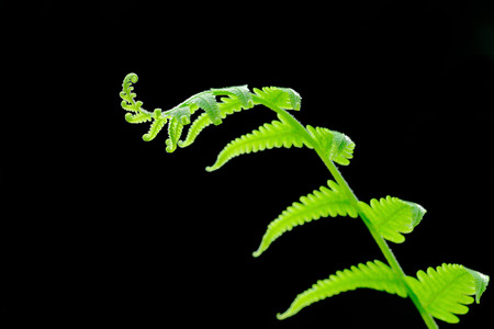 plant growth: It is Bent fern leaf for pattern.