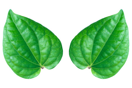 verdant: It is Two leaves isolated on white. Stock Photo