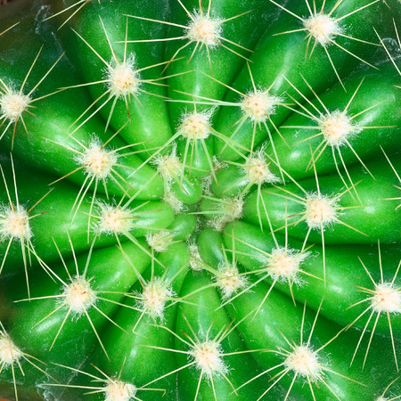 cactus: It is Green cactus with thorn for pattern.