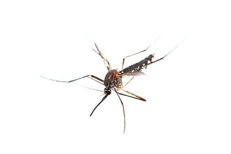 Een mug geïsoleerd op wit.
