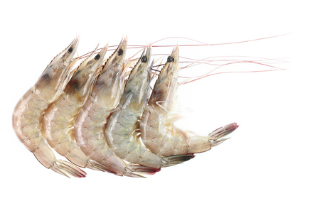 it is five river prawns isolated on white.