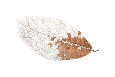 dry leaf: it is one dry leaf isolated on white. Stock Photo