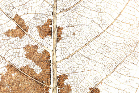 damaged: it is dry damaged leaf for pattern. Stock Photo