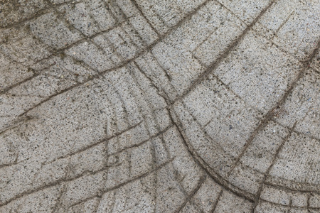 scraggly: it is design on cement and concrete for background.