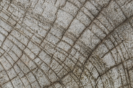 scraggly: it is design on cement and concrete texture for background.