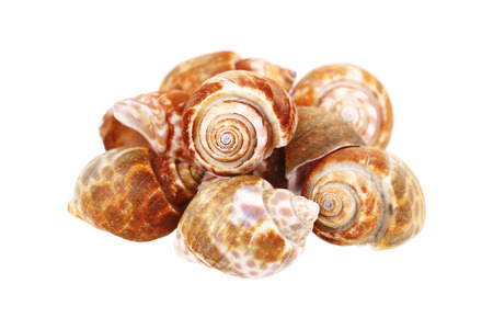 apple snail: it is clams isolated on white. Stock Photo