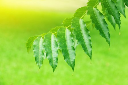 it is hanging treetop on green blur background. Stock Photo