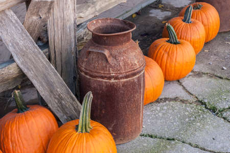 of yesteryear: Rusted milk can against a rustic fence with pumpkins