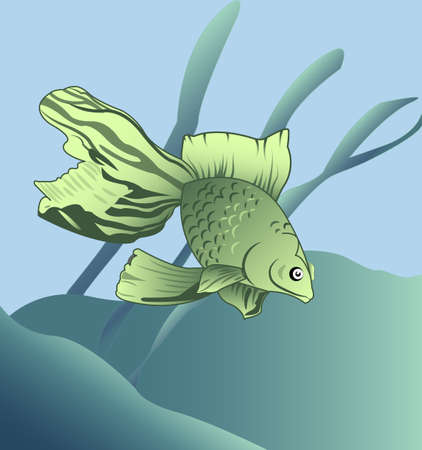 under the bed: Exotic green fish with flowing fins, swimming among the plants at the sea floor