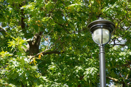 lamp post: Ornate lamp post against trees Stock Photo