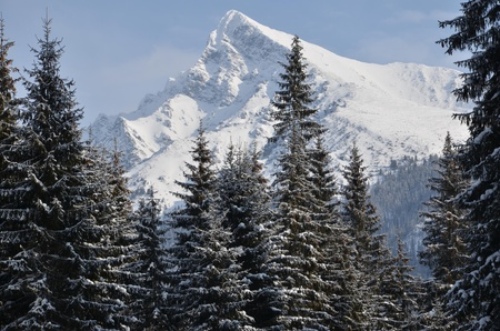 Big beautiful mountain in winter with trees in foreground. photo
