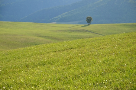 Tranquil life in a farm - lonely tree on green meadow photo
