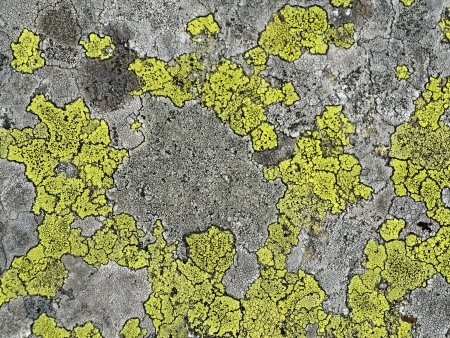 background structure containing mountain moss on granite stone Stock Photo