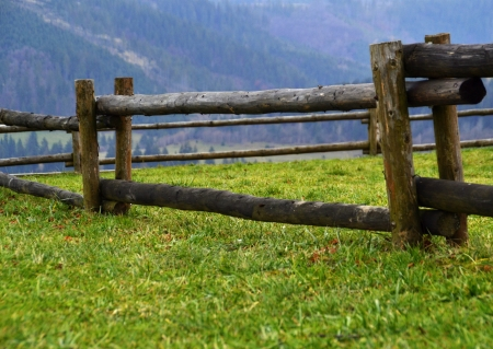 wooden fence landscape of tree trunks greenfield Stock Photo - 16451240