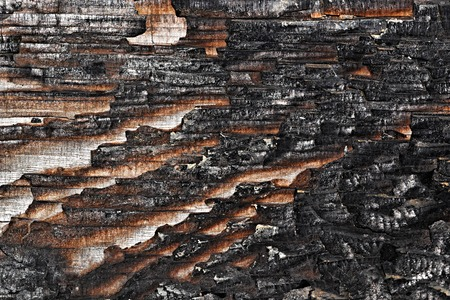 texture partially charred wood board