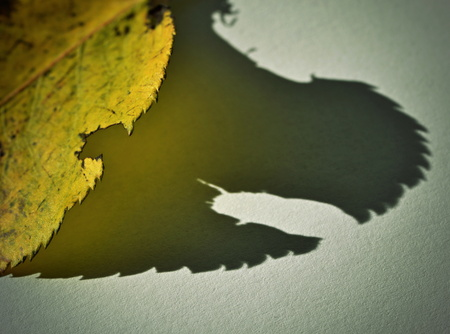 ghostly: background ghostly shadow yellow autumn leaves