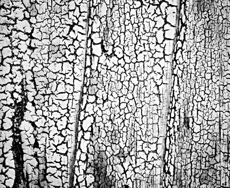 coatings: abstract background or texture black cracks on white coatings