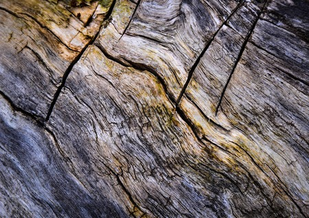 abstract background or texture old rotten wood