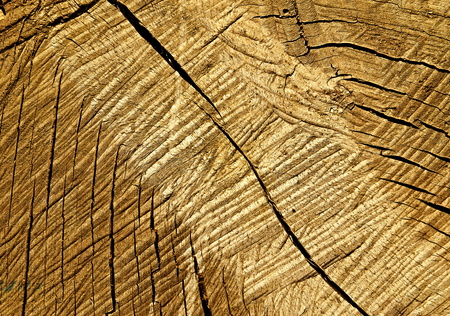 radial cracks: background or abstract texture Old dried wood and fissure