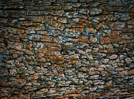 background or texture abstract old bark Stock Photo
