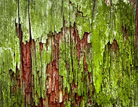 abstract background or texture green moldy old wood photo