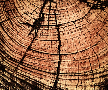 beautifully: abstract background or texture beautifully detail in wood Stock Photo