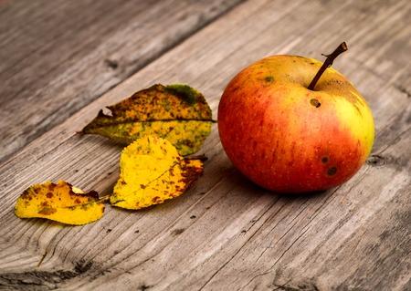 apfelbaum: Herbsthintergrund mit rotem Apfel Baum gelbe Bl�tter