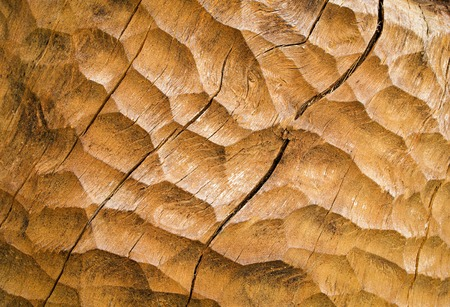 chiseled: abstract background or texture ocher chiseled wood