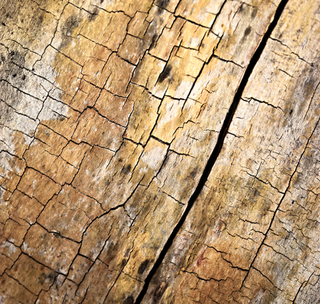 abstract background or texture Cracked rotten wood