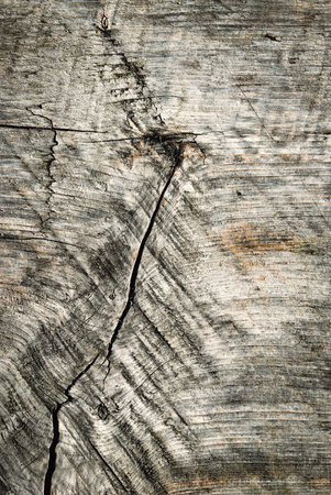 weatherworn: abstract background or texture Old wooden board with crack weatherworn